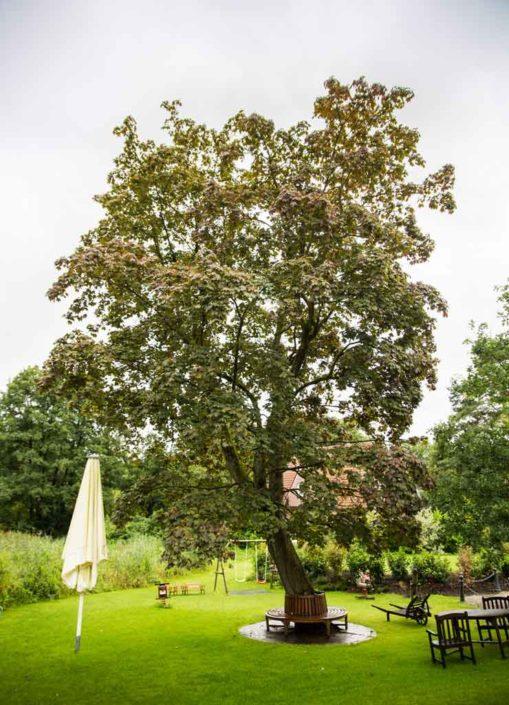 Baum im Garten der Alster Au
